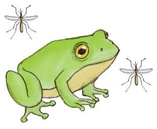 raganella-zanzare
