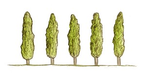 darefrutto-alberi_web